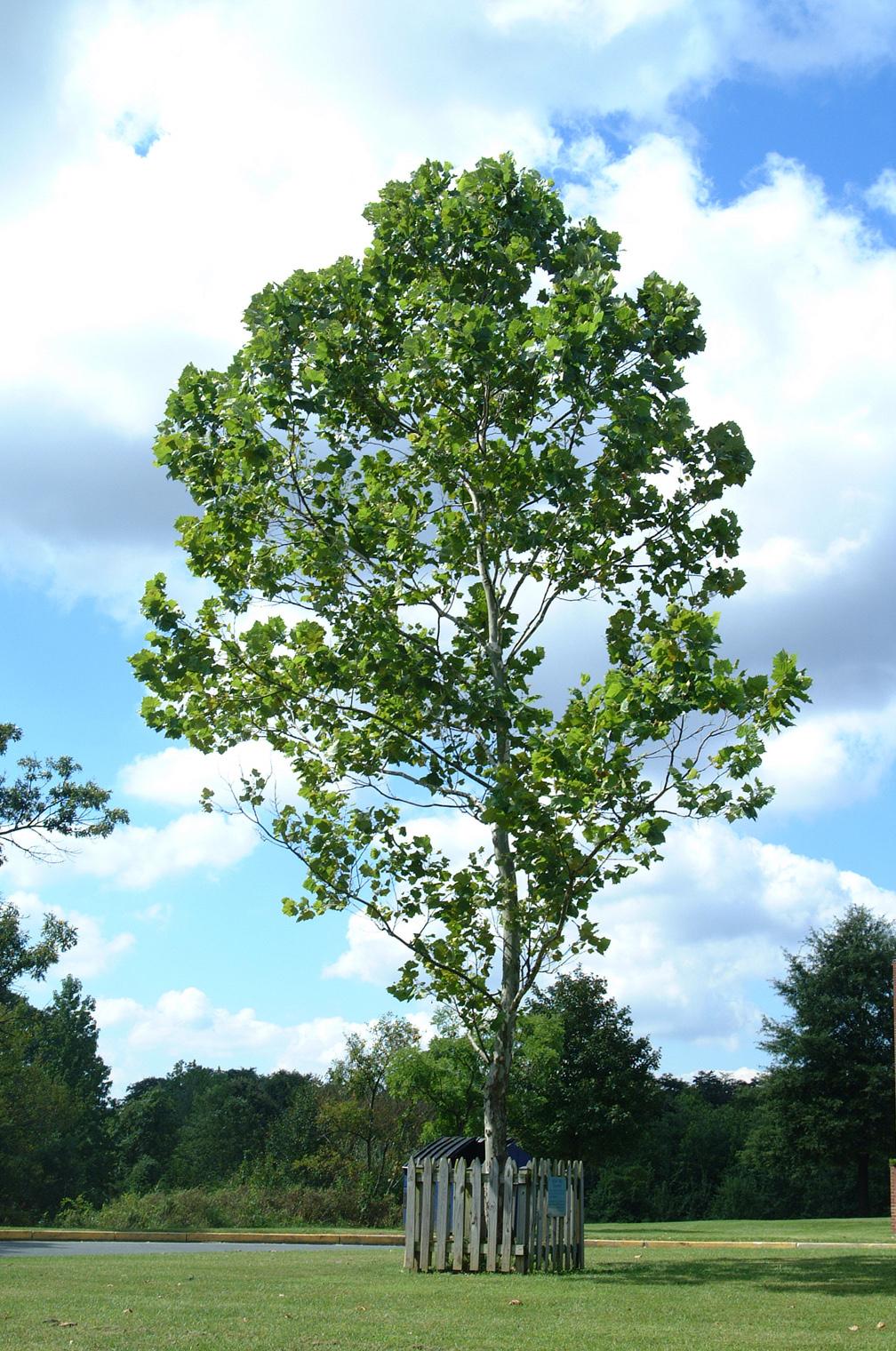 The tree is located at 38 deg 59 558 min n 76 deg 50 791 min w