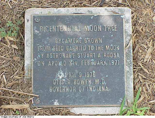 Locations Of Nasa S Moon Trees Lawn Amp Landscape