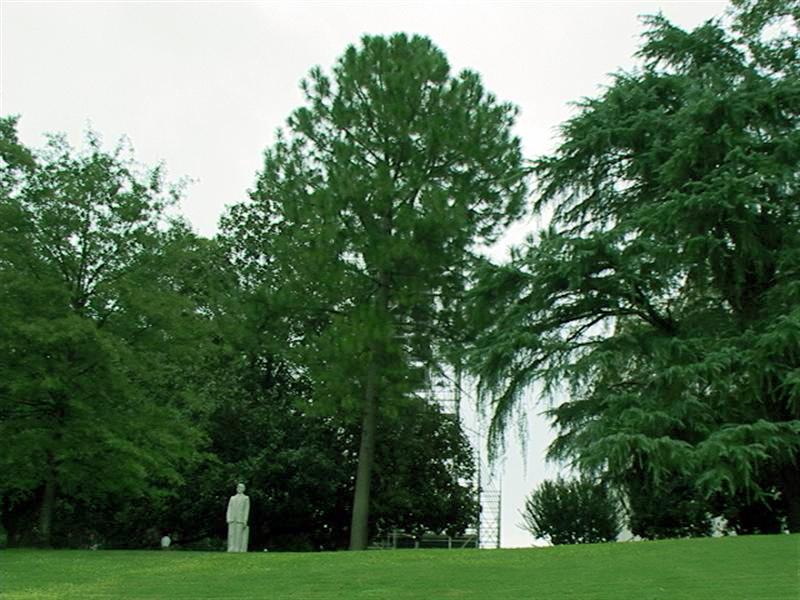 alabama state capitol moon tree